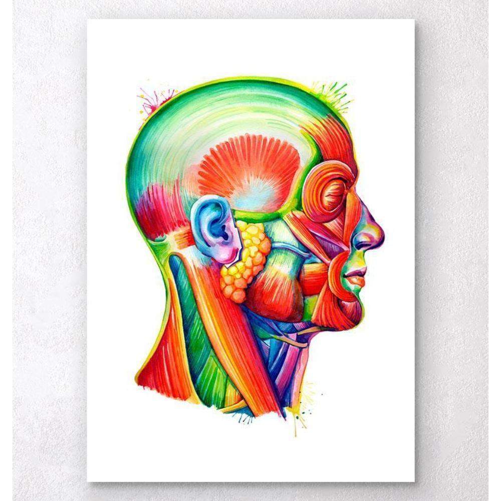 Head Anatomy Art Watercolor Splash