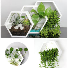 Load image into Gallery viewer, Shepherd Wall Terrarium