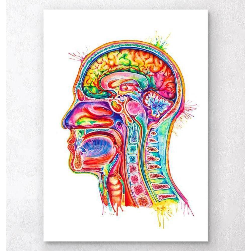 Head Section Anatomy Art Watercolor Splash