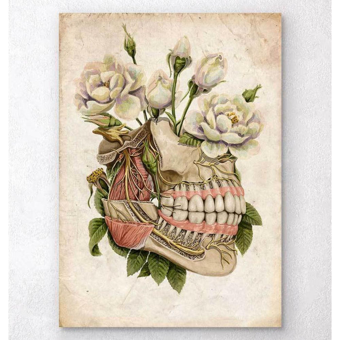 Dental Anatomy Floral Old Paper