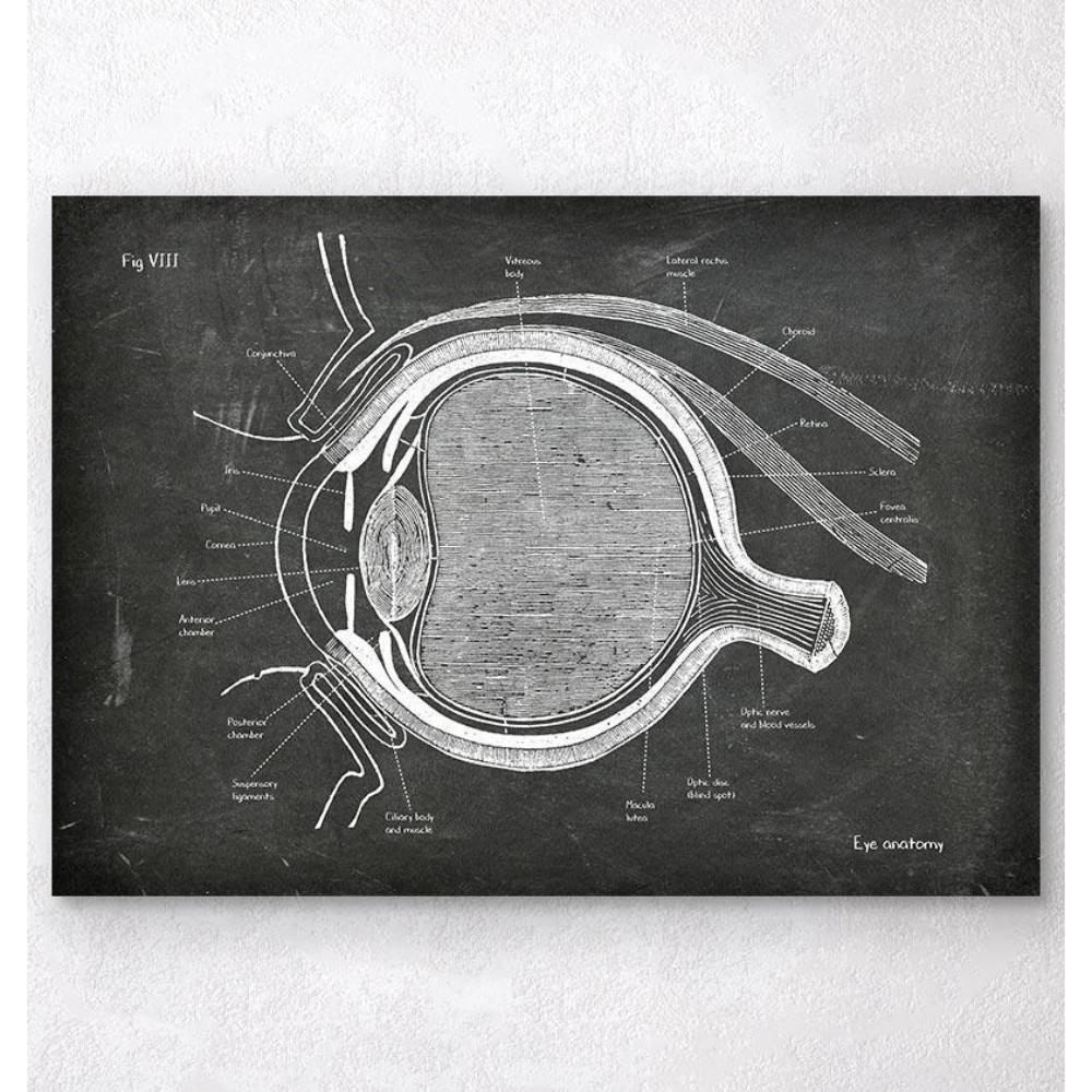 Eye Anatomy Chalkboard