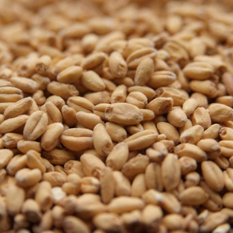 Unmalted Wheat-Great Western Malt