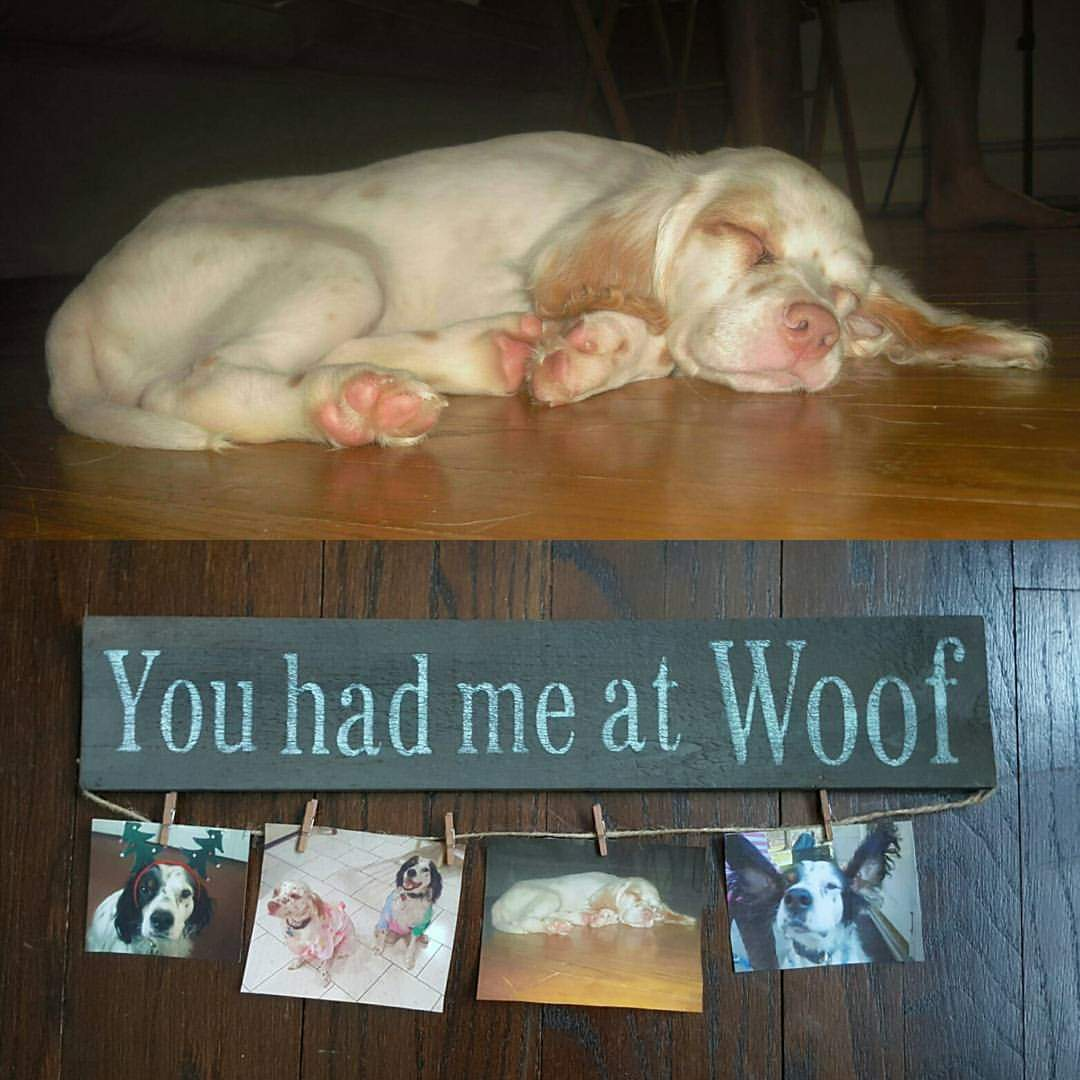 You Had Me At Woof Farmhouse Sign