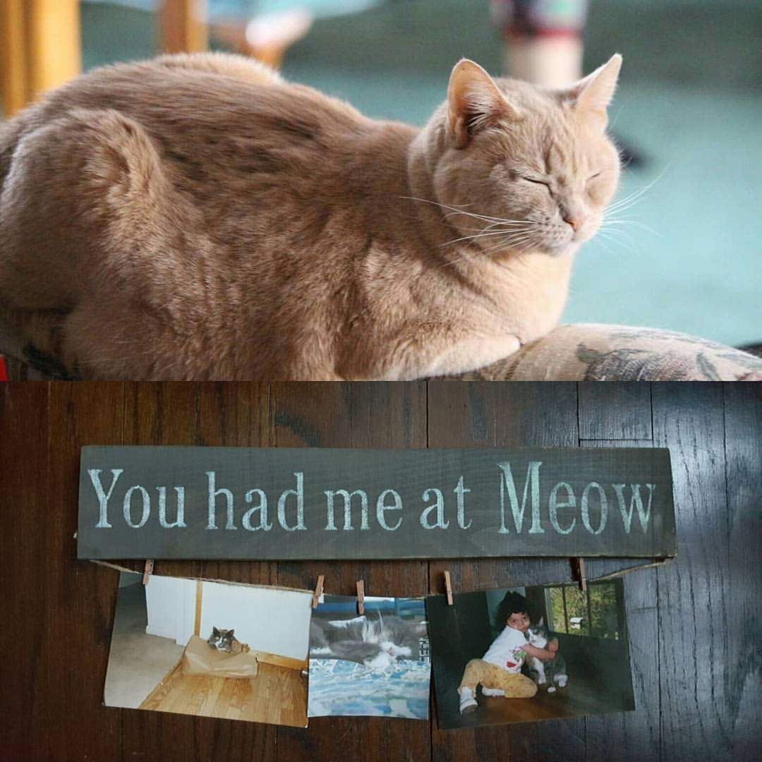 You Had Me At Meow Cat Lover Sign