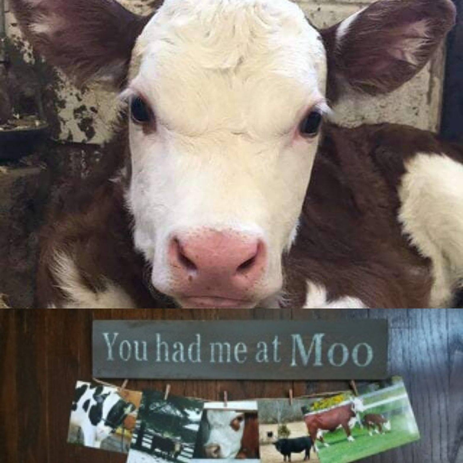 You Had Me At Moo Farmhouse Sign