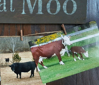 You Had Me At Moo Farmhouse Sign Pet A Rustic Feeling