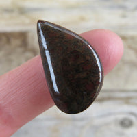 Teardrop shaped dinosaur gem bone cabochon