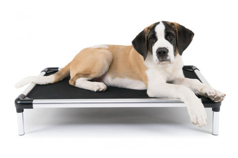 cujo cot dog bed - Elevated Dog Beds