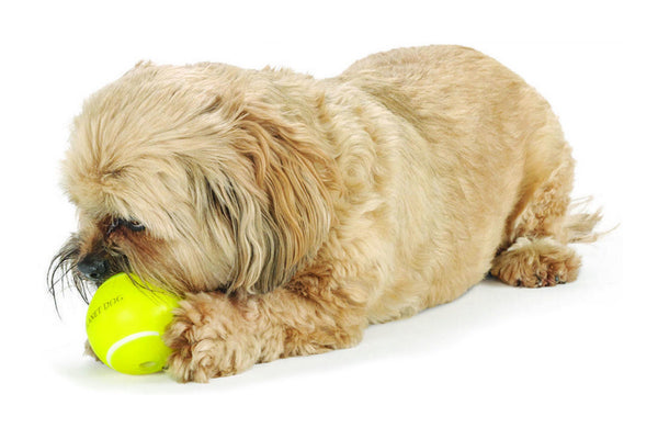 Orbee Sport Tennis Ball Indestructible Dog