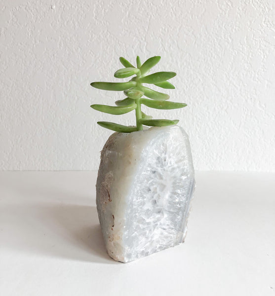 Succulent in Natural Geode Crystal Planter