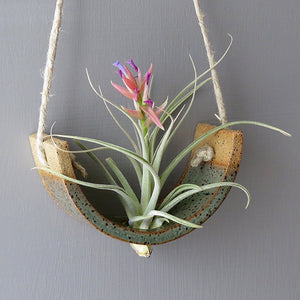 Small Hanging Air Plant Cradle - Gunmetal Green Planter Vase