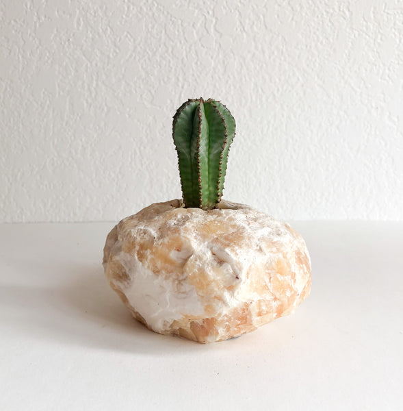 Cactus in Orange Calcite Crystal Planter