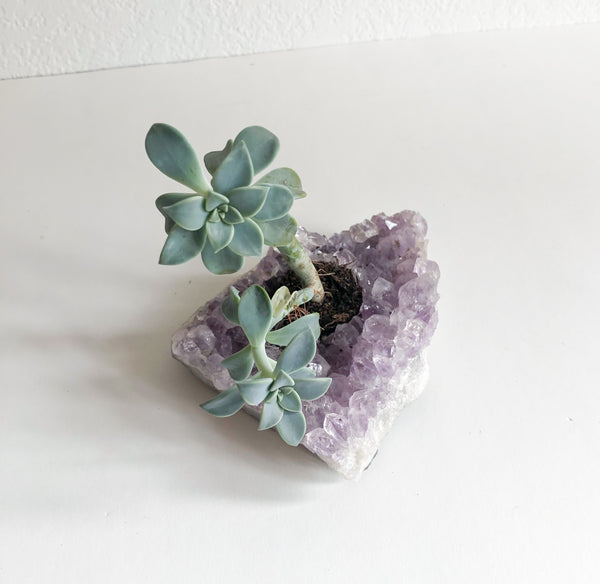 Succulent in Amethyst Crystal Planter