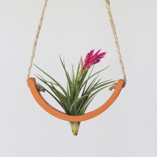 Small Terracotta Hanging Air Plant Cradle