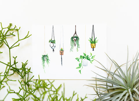 Hanging Plants Art Print
