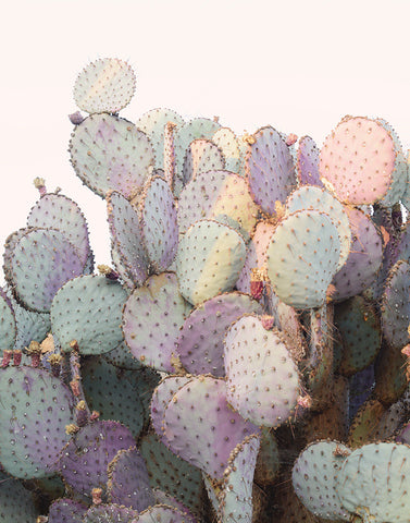 Purple Cactus Fine Art Photograph