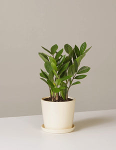 Kind Small Potted Plants