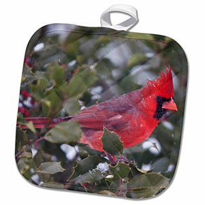 3D Rose Northern Cardinal Male in American Holly Tree in Winter-Marion Co. Il Pot Holder, 8 x 8