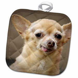 "3D Rose Toothless Chihuahua Dog-Santa Fe-New Mexico-Us32 Jmr0502-Julien McRoberts Pot Holder, 8"" x 8"""