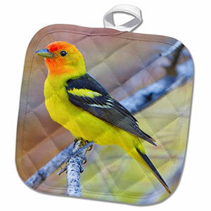 3D Rose USA-Washington-Breeding Plumage Western Tanager Bird-Us48 Glu0317-Gary Luhm Pot Holder 8 x 8