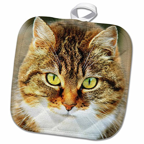 3D Rose Cute Image Domestic Cat People-Animal-Pet-Kitty Pot Holder, 8 x 8