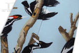 Birds - Wood Pecker