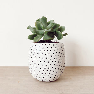 Small Poppy Seed Planter - $32