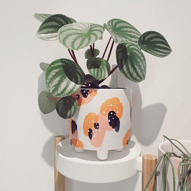 Peaches & Cream Leggy Planter