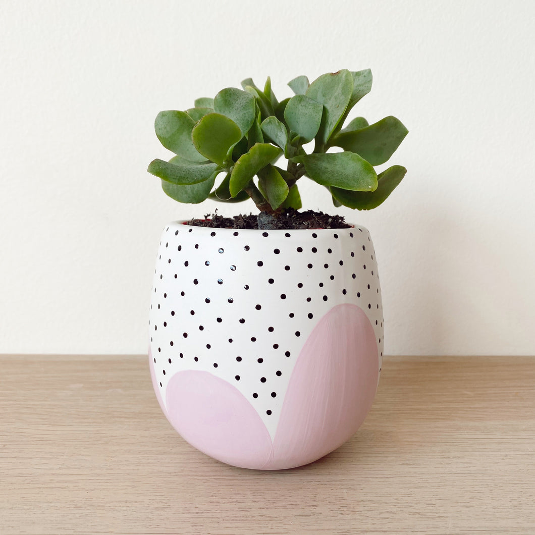 Small Lilac Poppy Seed Planter - $32