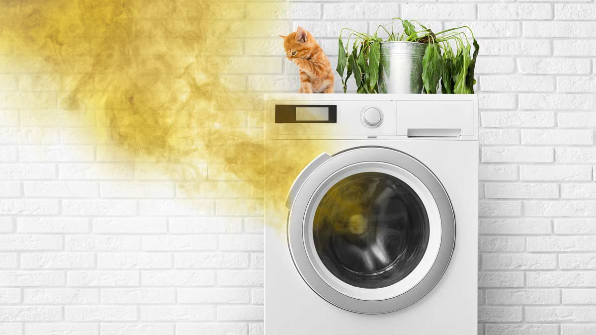 Mold in Your Washing Machine: The Mystery & the Menace