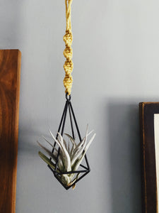 The Hayden Air Plant Holder - Likewoah Handmade
