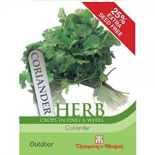Herb Coriander (Crops In Only 6 Weeks)