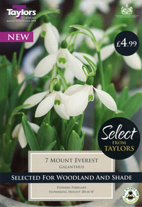 Galanthus Mount Everest Large Snowdrops Pack 7