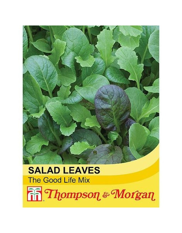 Salad Leaves Winter Greens - The Good Life Mixed