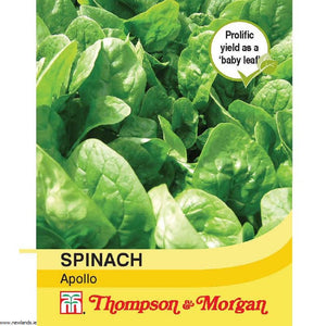 Spinach Apollo