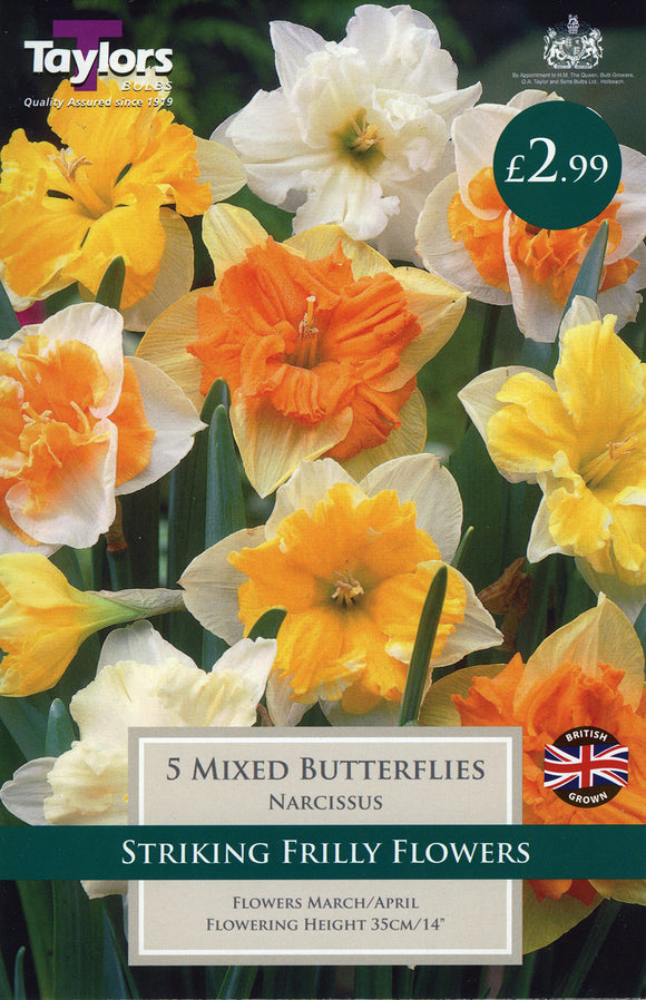 Mixed Butterflies Daffodil Pack of 5