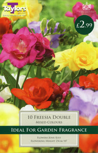Freesia Double Pack of 10