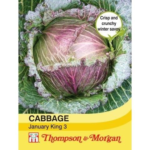Cabbage January King 3
