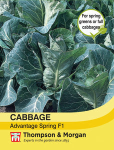 Cabbage Advantage Spring F1