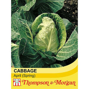 Cabbage April (Spring)