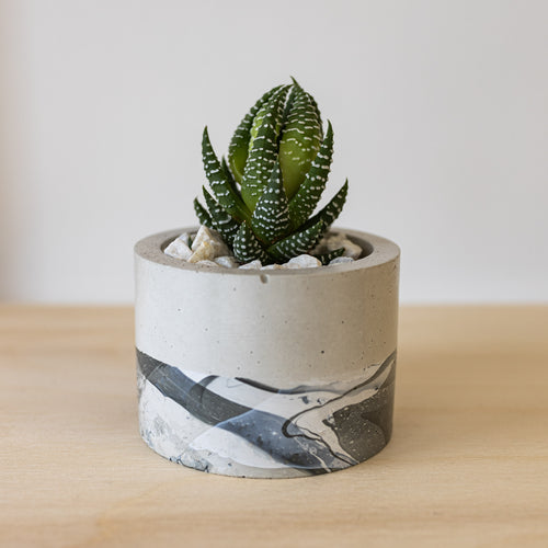 Small Cylinder Concrete Planter