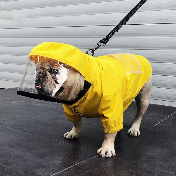 6 Best Dog Raincoats To Snuggle Up All Weather Conditions