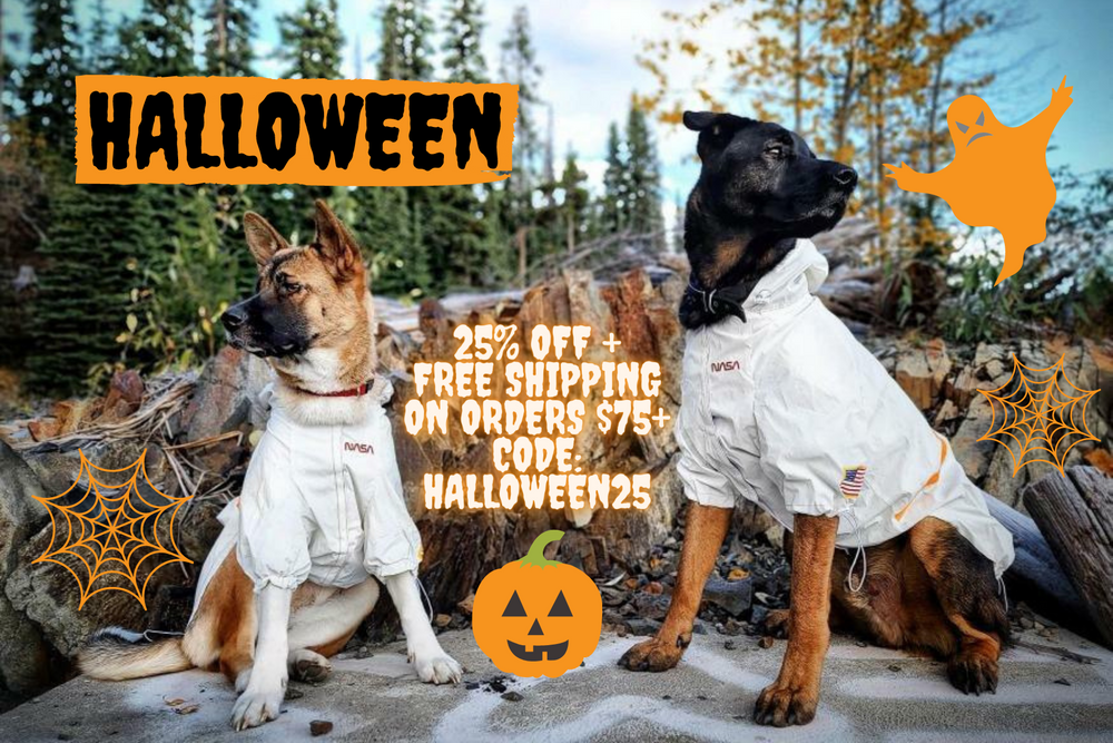 haloween dog clothes