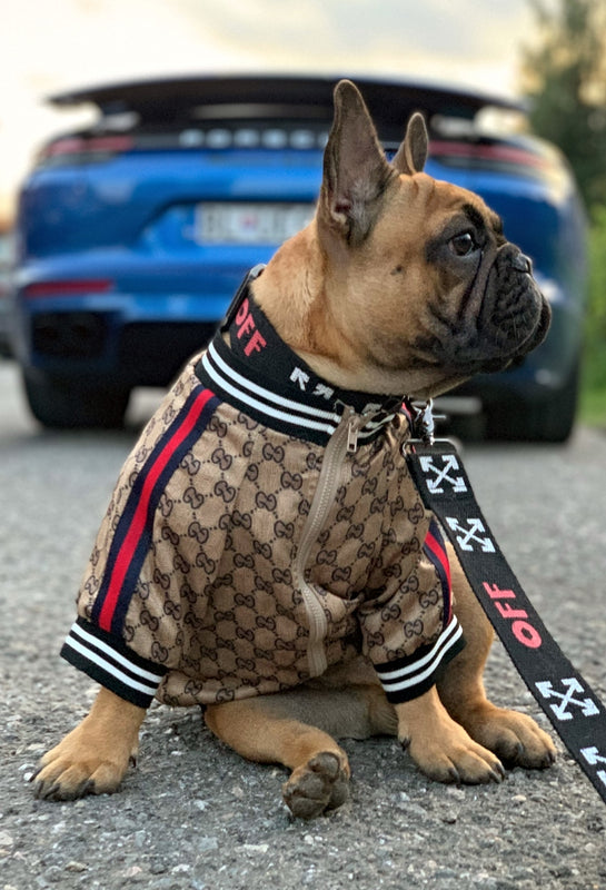 gucci dog clothes