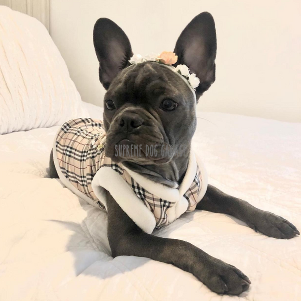 burberry dog clothes
