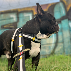 gucci dog harness and leash set