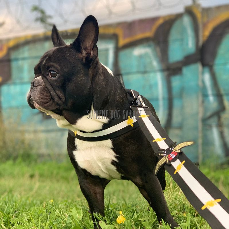 gucci harness and leash