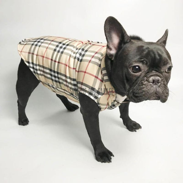burberry dog coat