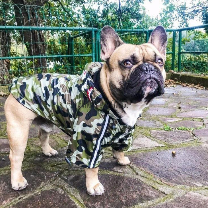 bape dog clothes