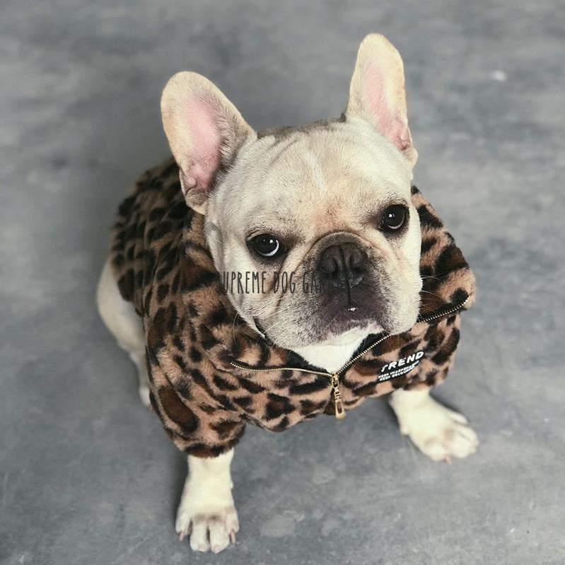 luxury dog clothes